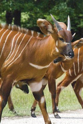 dyr med x